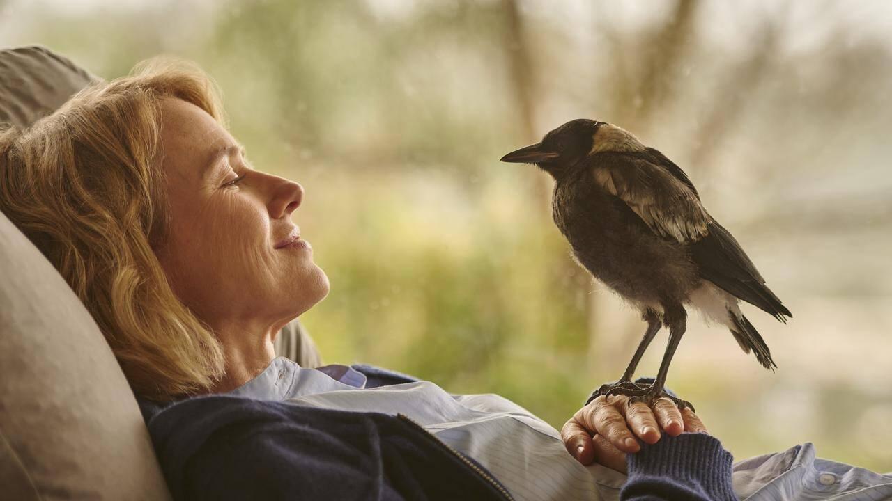 'Penguin Bloom:' New Netflix drama based on a true story ...